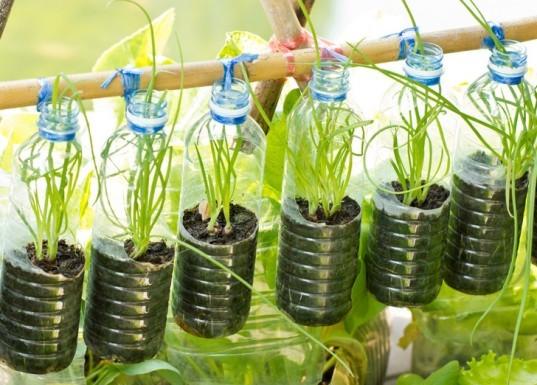 jardim vertical pet - Como criar e cuidar de um jardim vertical