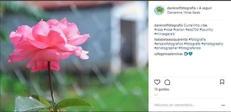 rosa em destaque