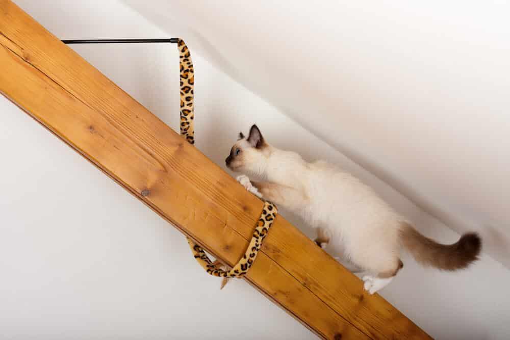 decoracao amante animais arquiteta 5 - Ideias de decoração para quem é amante de animais